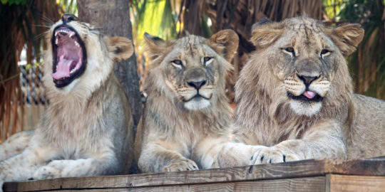 Naples Zoo reopens with timed tickets